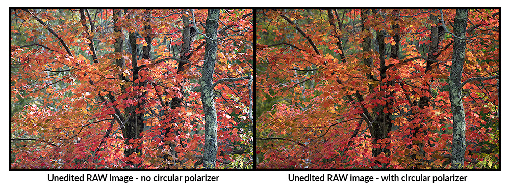 Circular polarizers reduce glare and enhance color